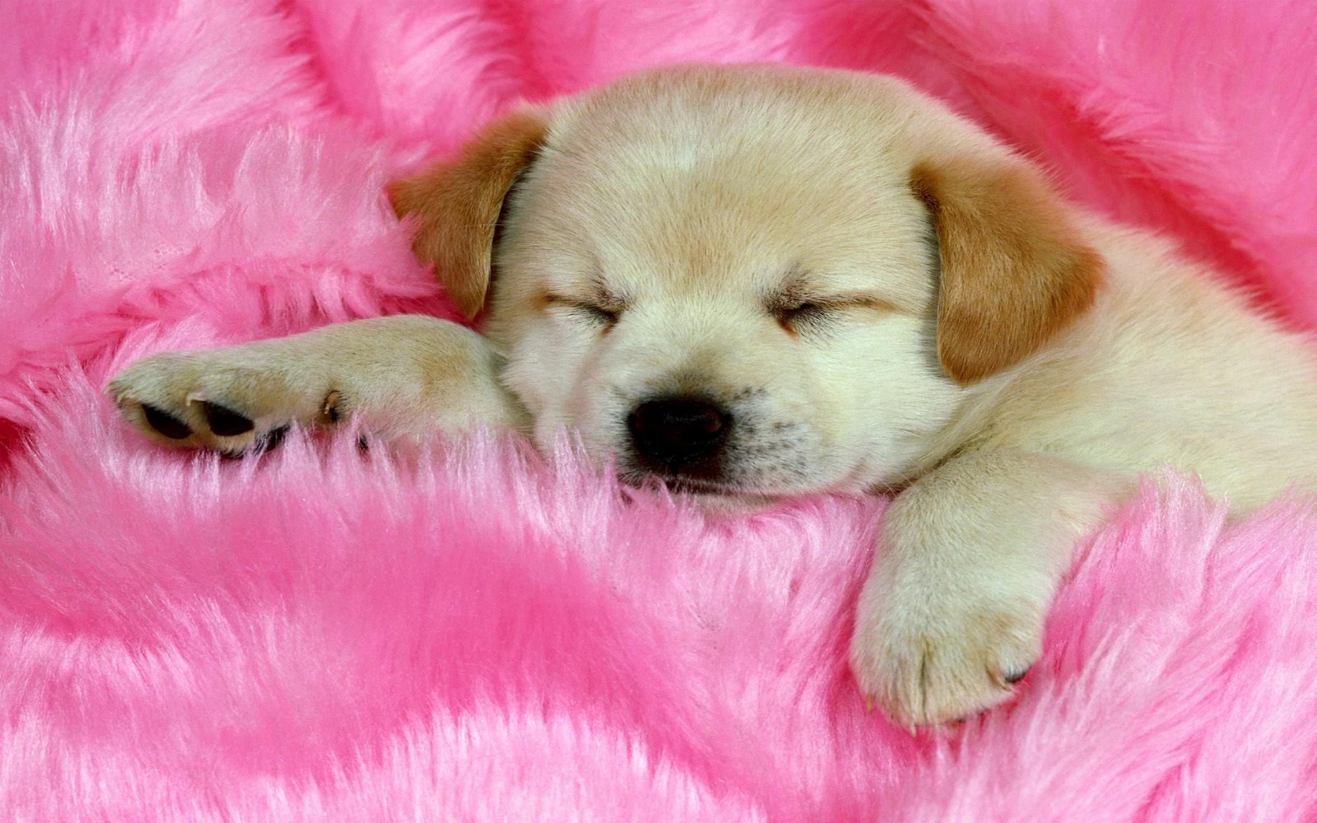 37 Cute Stuff Wallpapers Sleepy Puppy