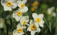 Beautiful Nature Picture with White and Yellow Flowers