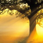 Nature Images HD collection with picture of Big Tree in Morning