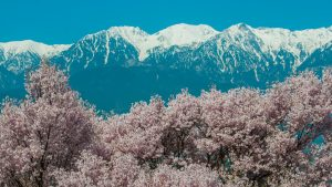 Nature Images HD with picture of Cherry Blossoms in Komagane Japan