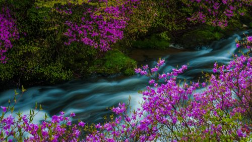 Free Nature Images HD with Yugawa River Japan