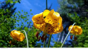 Attachment for full hd nature wallpapers 1080p desktop - yellow flower