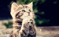 Attachment picture for funny animal wallpapers free download with praying kitten