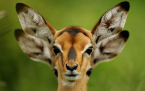The Image Attachment of funny pictures of animals of two female deer