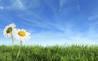Attachment for nature wallpapers high resolution spring - blue sky and green grass