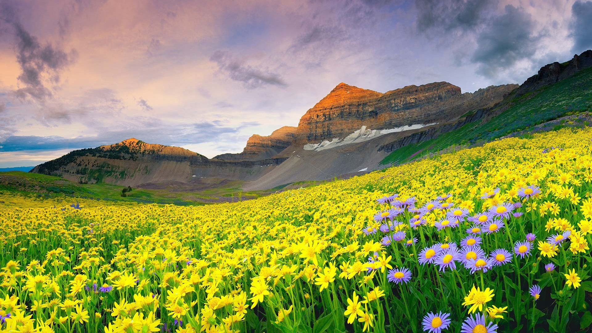 10 Best Nature Images HD In India With Valley Of Flowers