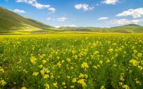 Free Download of 4K Wallpaper with Rapeseed Field in Summer