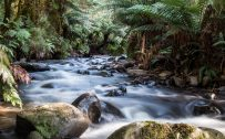 4K Nature Wallpaper with Cement Creek Warburton