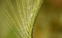 Free Download of Macro Photo for Apple iPhone Home Screen