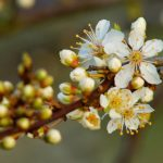 Flower Blossom HD Wallpaper