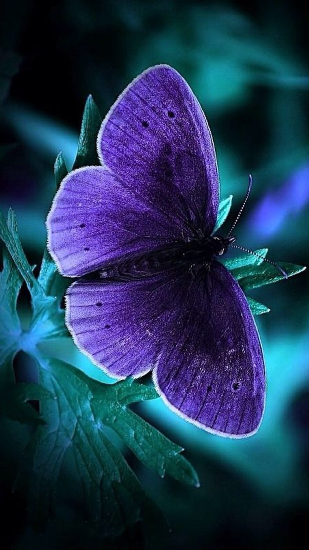 Cool Phone Wallpapers with Blue Butterfly in Dark - HD ...