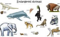 Picture of Endangered Animals with Names for Children