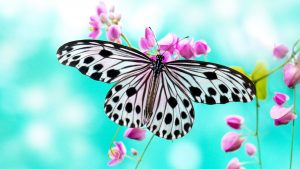 Free download of fantasy butterfly wallpaper 01 of 10 - black and white