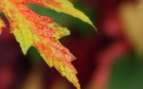 Fall Of The Autumn Hd Wallpaper 1080p