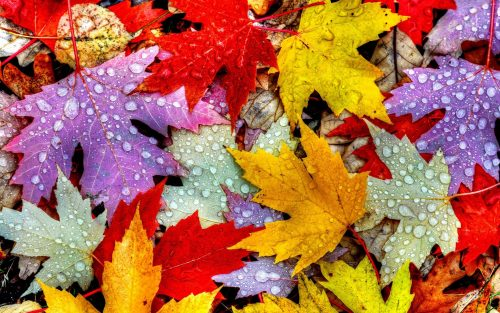 Download Of Free Online Autumn Desktop Wallpaper