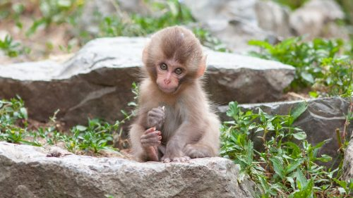 Pictures of baby monkeys in HD 1080p