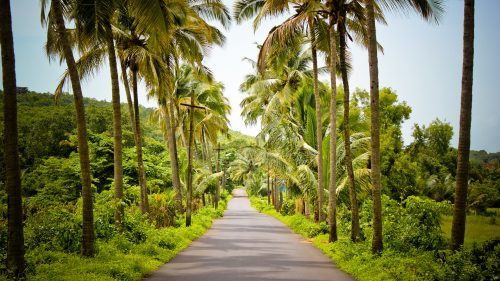 Download file for High resolution nature pictures with India beautiful street in village