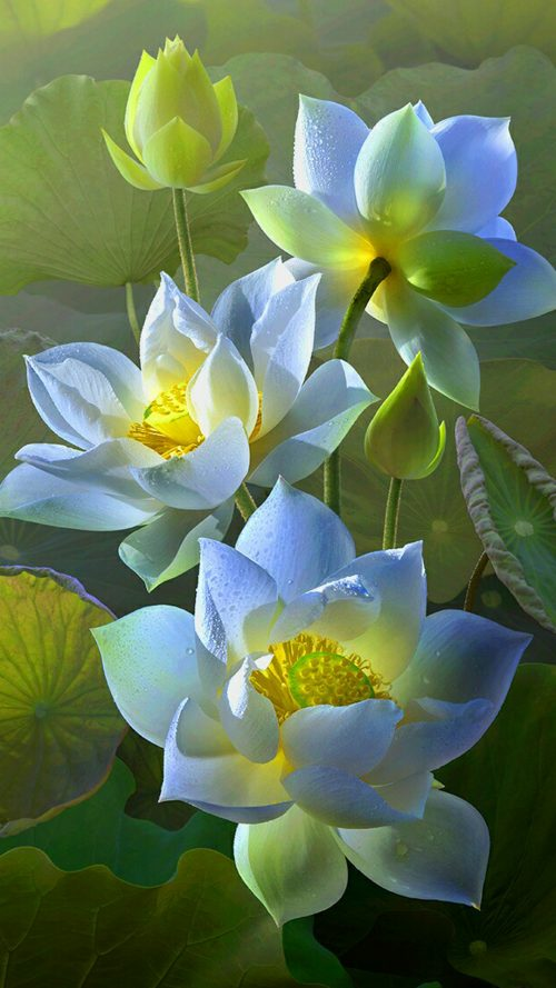 Lotus Flower Wallpaper For Samsung Galaxy J7 Prime