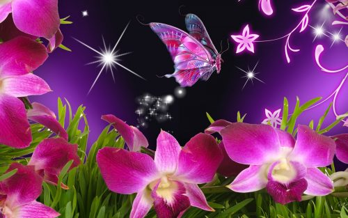 natural 3d images for wallpaper with butterfly and flowers 1680 1050