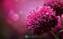File attachment for Desktop Backgrounds for windows 10 - purple flower