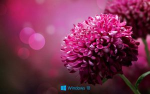 File attachment for Desktop Backgrounds for windows 10 - purple flower