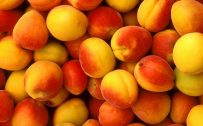 Peach Color Wallpaper with Peach Fruits Picture