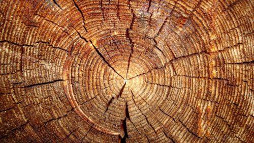 Wood Log Tree Trunk for Wallpaper That Looks Like Wood