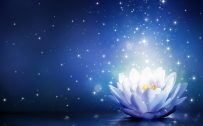 Animated White Lotus Flower with Blue Background