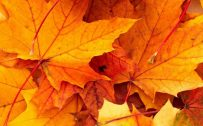 Best wallpapers for iPhone 6 with high-resolution fall pictures