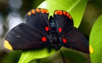 Beautiful Nature Wallpaper Big Size #03 with Close Up Butterfly Photo