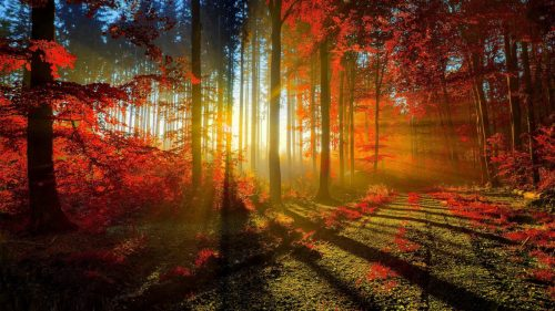 Autumn Forest in Morning for Beautiful Nature Wallpaper for Desktop