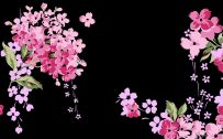 Black And Pink Floral Wallpaper