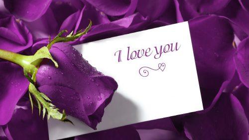 Full HD Love Wallpaper with Romantic Purple Wet rose