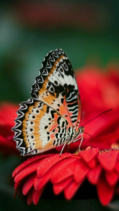 Nokia 7 Wallpaper with Picture of Butterfly on Flower