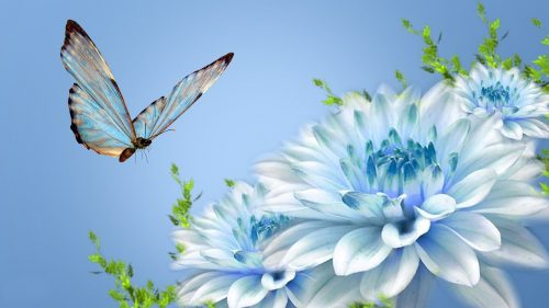 Animated Pictures of Blue Flowers and Butterfly in HD 1080p