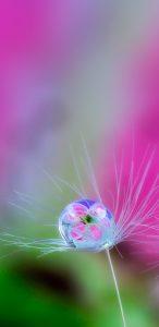 Macro Photo of Water Drop On Dandelion for Samsung Galaxy S9 Wallpaper
