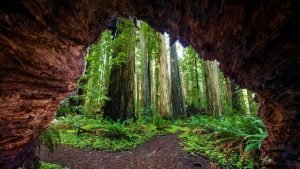 Natural Images HD 1080p Download with Redwood Trees At Jedediah Smith Redwoods State Park
