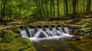 Natural Images HD 1080p Download with Waterfall in Tollymore Forest Park