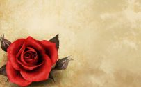 Top 25 Pictures Of Red Roses - #11 - for Vintage Wallpaper