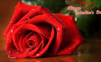 Top 25 Pictures Of Red Roses - #18 - for Valentines