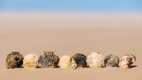 Artistic Picture of Seashell on White Sand for Desktop Background