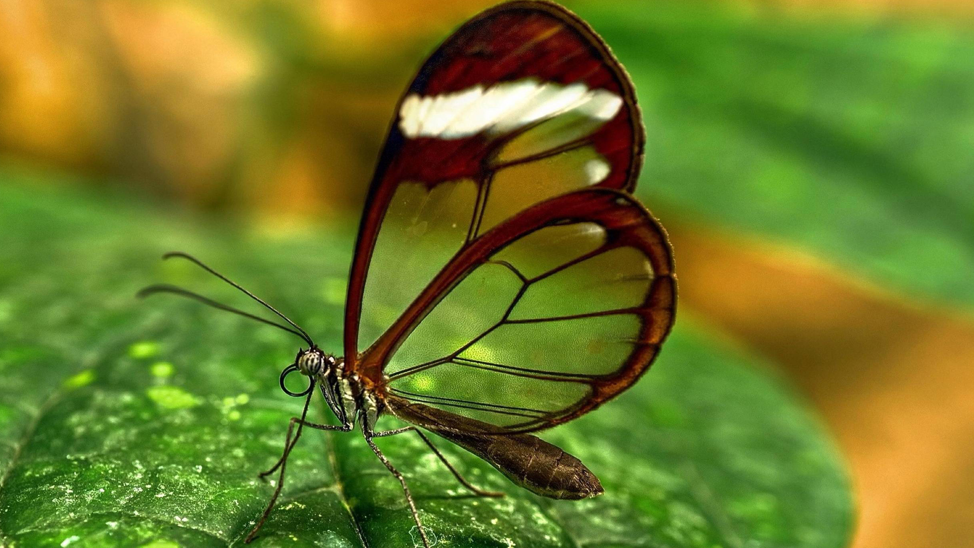 our relationship isnt perfect butterfly