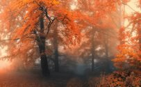Autumn forest hd wallpaper - morning mist