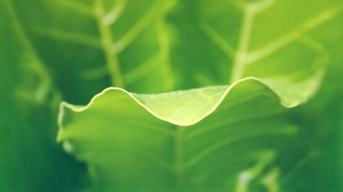 HD wallpapers 1080p widescreen nature free download with macro photo of green leaves