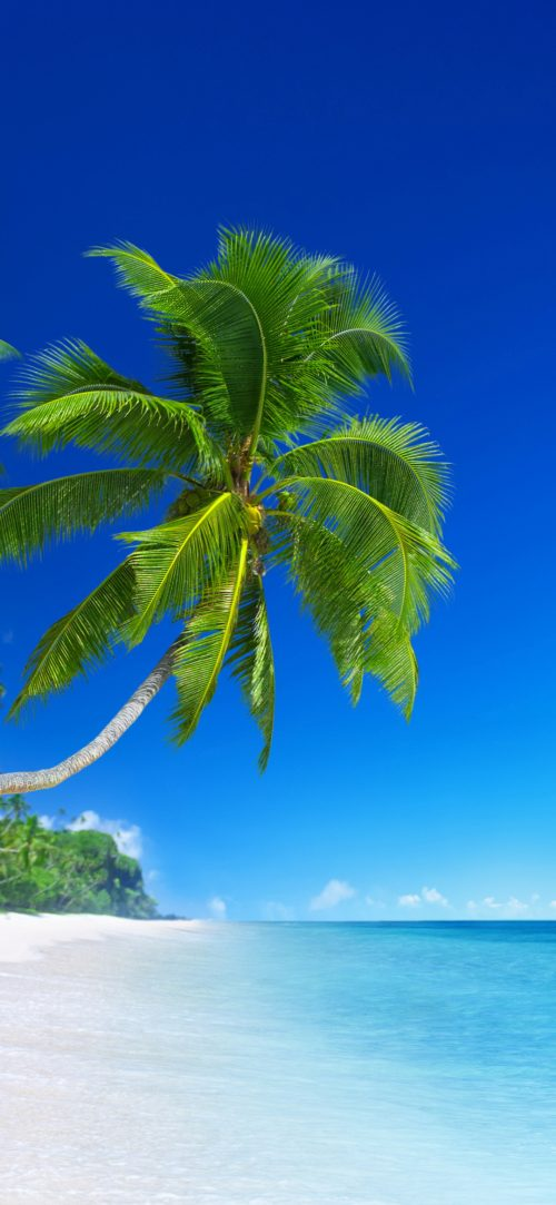 Beach Wallpapers for Phone with Picture of Beautiful Tropical Beach and Coconut Tree