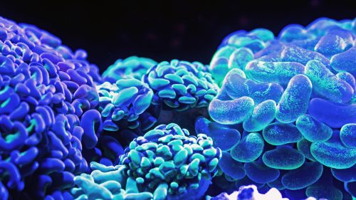 Beautiful Nature Wallpaper Big Size #21 - Blue Corals Picture in 4K