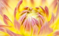 Beautiful Nature Wallpaper Big Size #40 – Macro Photo of Yellow Daisy Flower