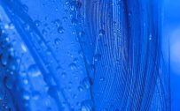 10 Blue Wallpapers That Will Look Perfect for Nokia 8.3 5G - #10 - Water Droplets on Feather