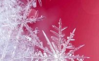 10 Wallpapers That Will Look Perfect on Your Samsung Galaxy S20 - #08 - Close-Up Snowflake
