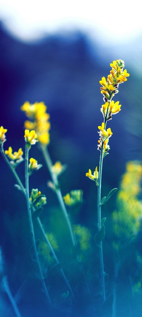 10 Alternative Wallpapers for Oppo Reno4 Pro 5G with Nature Image - 06 - Spring Flowers